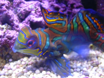 medium_aquarium_482.jpg