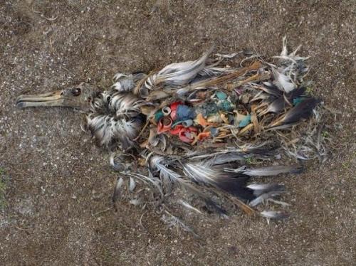 oiseau plastic.jpg