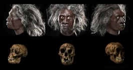 crane-et-reconstitution-faciale-d-h-floresiensis_1445_h140.jpg