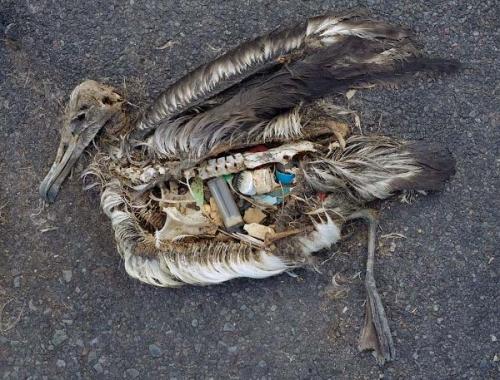 oiseau-plastique-ocean-jordan.jpg